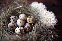 Pasen-kwartelseieren in het nest op rustieke houten Stock Foto