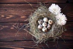 Pasen-kwartelseieren in het nest op rustieke houten Royalty-vrije Stock Foto's