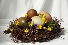 Pasen-nest Stock Afbeeldingen