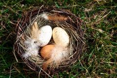 Pasen-nest met eieren op gras Royalty-vrije Stock Foto's