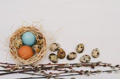 Pasen-nest met kleurrijke eieren en pussy wilgentakjes Stock Afbeeldingen