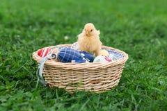 Pasen-nest met kuiken Royalty-vrije Stock Afbeelding
