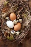 Pasen-nest van berktakjes en groen mos met kip en kwartelseieren op houten achtergrond stock afbeeldingen
