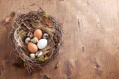Pasen-nest van berktakjes en groen mos met kip en kwartelseieren op houten achtergrond stock foto's