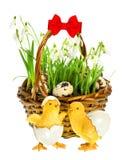 Pasen-samenstelling met grappige kip en bloemen Stock Foto's