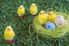Pasen-samenstelling met younkippen en eieren in nest Stock Foto