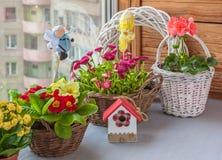Pasen-samenstelling van madeliefjes, sleutelbloemen, geraniums in manden Stock Foto's
