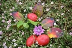 Pasen-tijdvruchten en bloemen Stock Afbeeldingen
