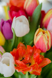Pasen Tulip Bouquet Royalty-vrije Stock Afbeelding