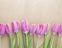 Pasen-Tulpen Stock Foto
