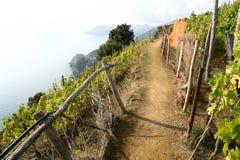 Un paseo agradable a través de la yarda del vino por el mar Imágenes de archivo libres de regalías