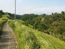 Paseo Bali del canto de Campuhan Imagen de archivo libre de regalías