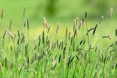 Paseo bucólico en los campos verdes Imagenes de archivo