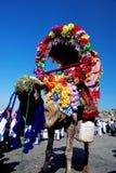 Paseo colorido del camello imagen de archivo