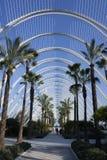 Paseo con las palmeras en el Umbracle de la ciudad de artes y de ciencias fotografía de archivo