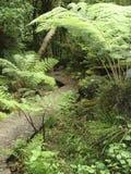 Paseo de Bush Imagen de archivo