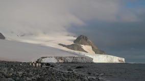 Paseo de cinco pingüinos a lo largo de la costa costa Andreev metrajes