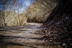 Paseo de domingo en bosque Fotos de archivo