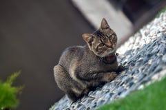 Paseo de gato Imagenes de archivo