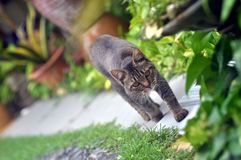 Paseo de gato Foto de archivo