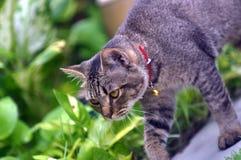 Paseo de gato Fotos de archivo