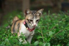 Paseo de gato del gatito en árbol en jardín Fotografía de archivo libre de regalías
