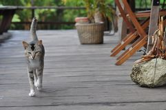 paseo de gato en la prolongación del andén foto de archivo