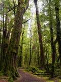 Paseo de Gunn Nature del lago en bosque de la haya Imágenes de archivo libres de regalías