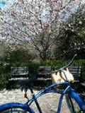 Paseo de la bici de la primavera Foto de archivo