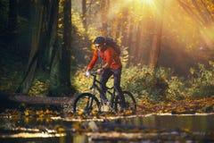 Paseo de la bici en Autumn Forest Fotografía de archivo libre de regalías