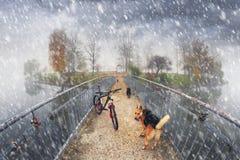 Paseo de la bici entre el otoño y el invierno Fotos de archivo libres de regalías