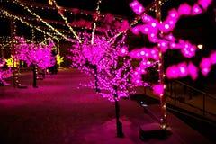 Paseo de la ciudad en la noche en invierno Callejón con las luces, árboles, guirnaldas Imágenes de archivo libres de regalías