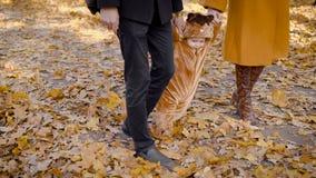 Paseo de la familia en el bosque en otoño almacen de video