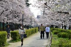 Paseo de la gente en el jardín de Sakura imagen de archivo libre de regalías