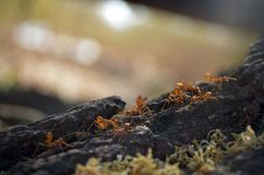 Paseo de la hormiga Imagen de archivo libre de regalías