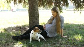 Paseo de la mujer con el perro en parque Muchacha embarazada Mujer embarazada en parque metrajes