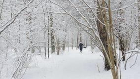 Paseo de la mujer en el perro de Forest With A del invierno La visión desde la parte posterior metrajes