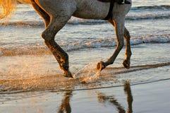 Paseo de la playa del caballo de la puesta del sol Foto de archivo libre de regalías