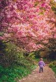Paseo de la primavera Foto de archivo libre de regalías