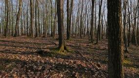 Paseo de la primavera del bosque almacen de metraje de vídeo