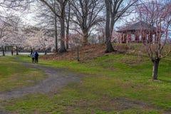 Paseo de la primavera en el parque Fotografía de archivo libre de regalías