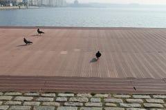 Paseo de las palomas en el área del puerto Fotos de archivo