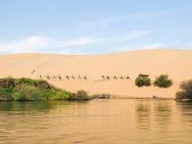 Paseo de los camellos Imagen de archivo libre de regalías