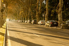 Paseo de Los Curas Μάλαγα Ισπανία Andalicia Στοκ Εικόνες