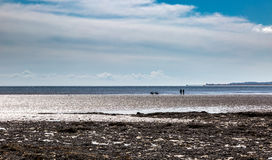 Paseo de los pares con dos perros sobre el mar Imagen de archivo libre de regalías
