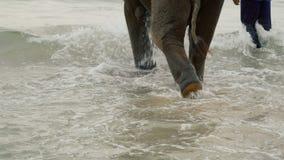Paseo de los turistas en elefantes jovenes