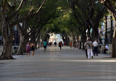 Paseo de prado photo stock