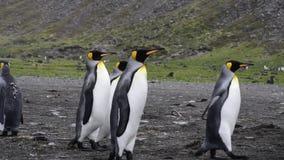 Paseo de rey Penguins en la playa metrajes