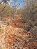 Paseo de Ridge al puesto de observación de los torneros en el parque nacional de la garganta de Trephina Imagen de archivo libre de regalías