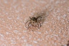 Paseo de salto de la araña en el piso Imágenes de archivo libres de regalías